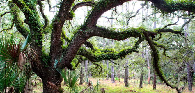 US National Parks - Cumberland Island Georgia